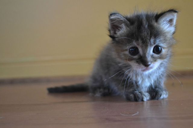 cute_kittens_pictures_15